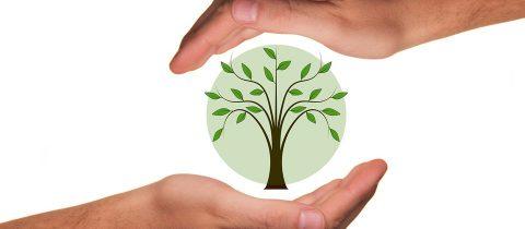 L'industrie du bio : un marché en pleine croissance